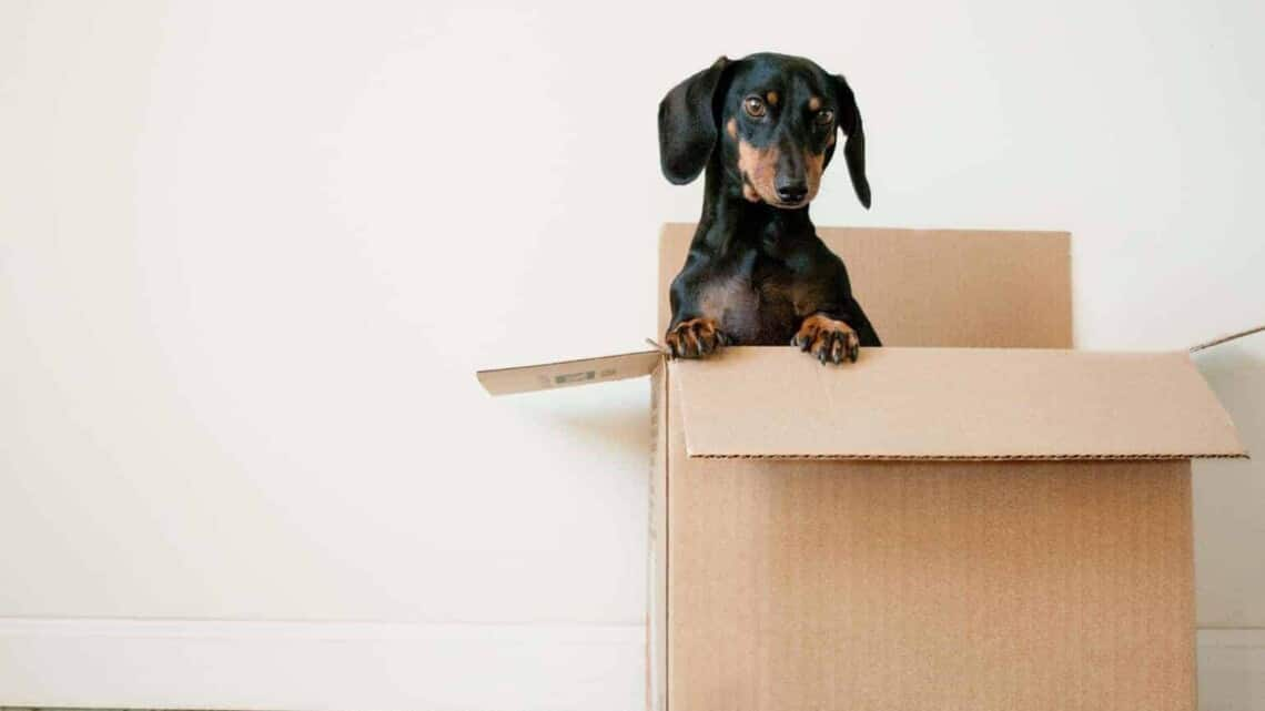 How to make moving to a new house less hassle